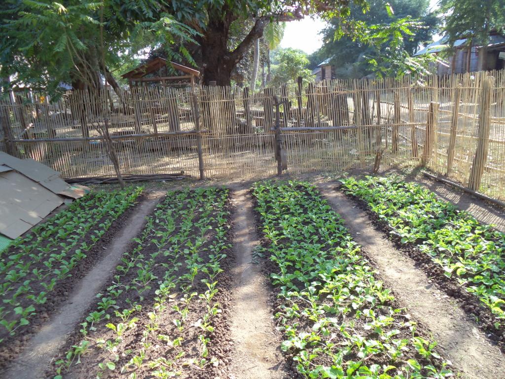 Home garden of people in Koh Preah