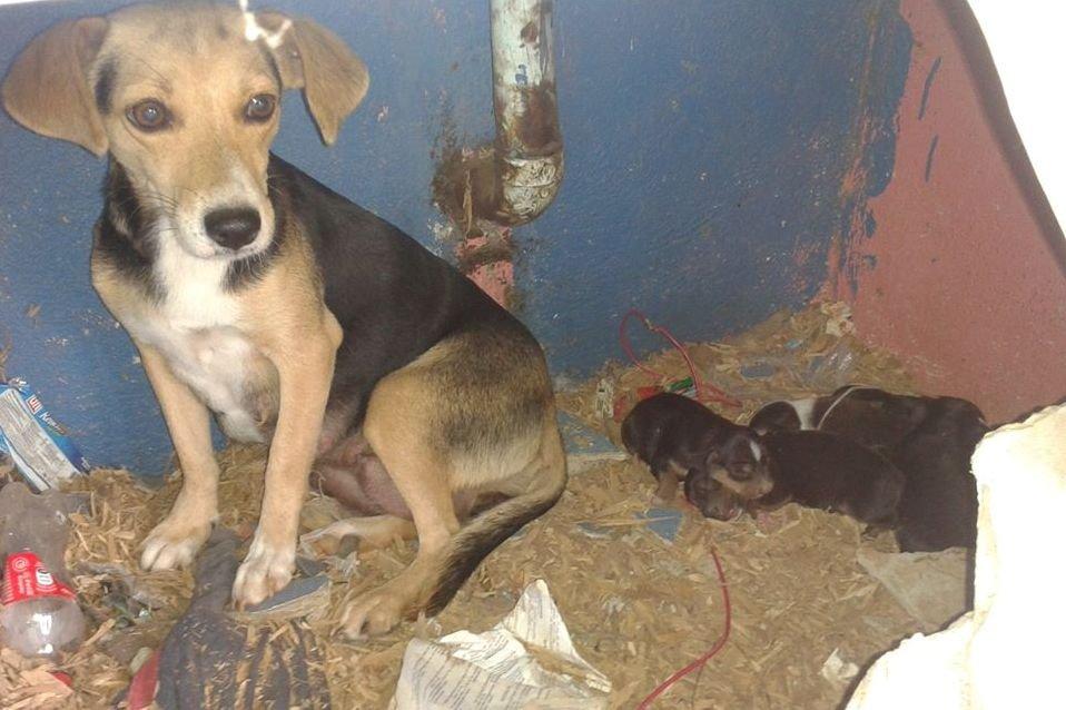 Spay/Neuter Street Dogs in San Ramon, Costa Rica