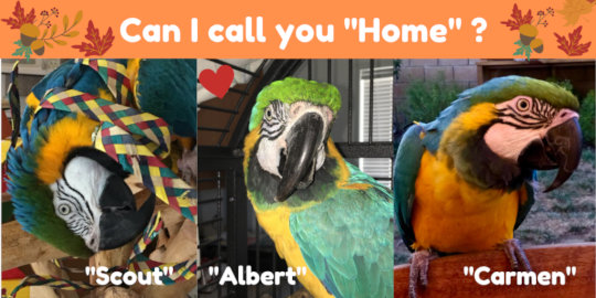 SCOUT, ALBERT & CARMEN ARE WAITING FOR A NEW HOME!