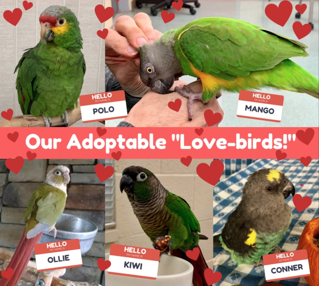 OUR ADOPTABLE PARROTS ARE LOOKING FOR A NEW FAMILY