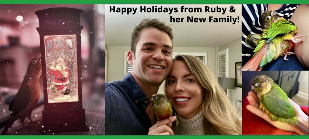 A CHRISTMAS WISH COME TRUE - RUBY HAS A HOME!
