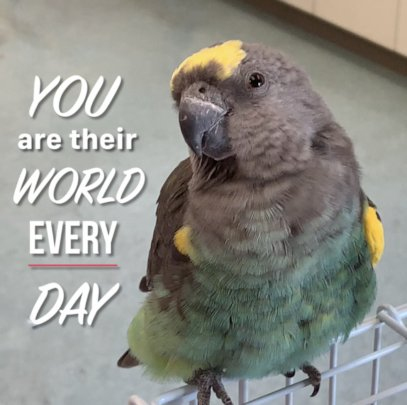 WE ARE OUR PARROTS' WORLD - EVERY DAY- !!