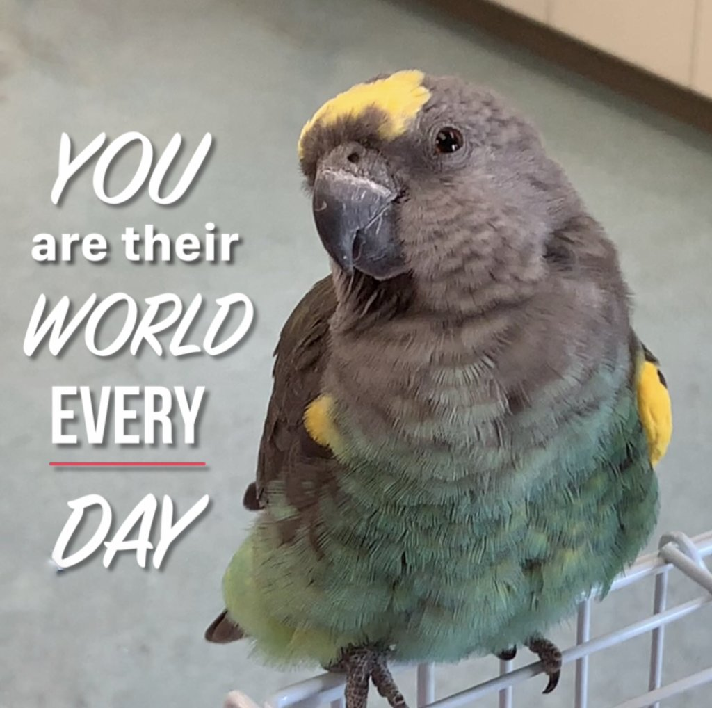 WE ARE OUR PARROTS