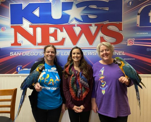 CARRIE, TRACI & BETH with ALBERT & PICASSO at KUSI