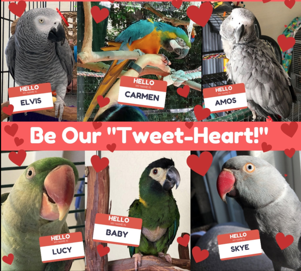 Reports from Parrot Education and Adoption Center - GlobalGiving