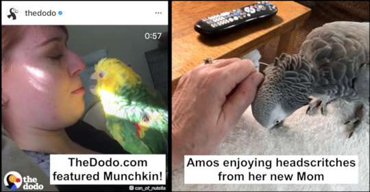 MUNCHIN AND AMOS HAVE HAPPY ENDINGS IN COMMON