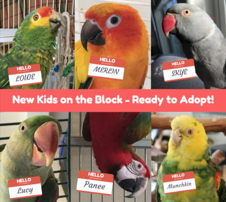 New Kids on the Block and Ready to Adopt!