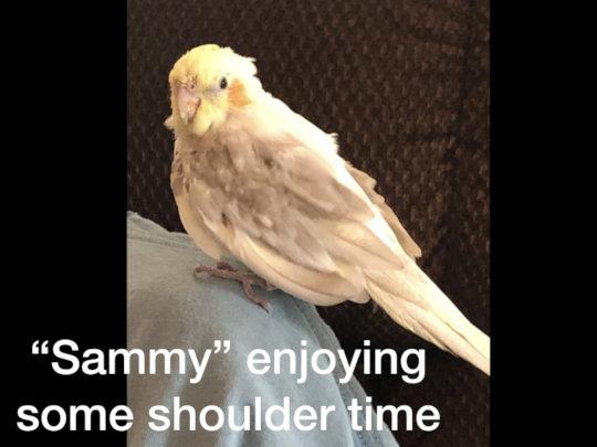 SAMMY ENJOYS SOME SHOULDER TIME