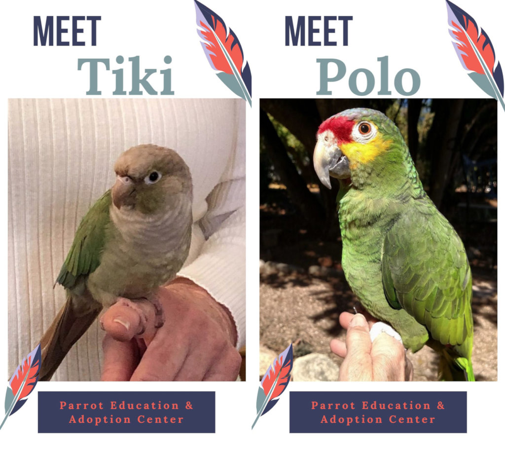 LEARN MORE ABOUT TIKI & POLO at PEAC.PETFINDER.COM