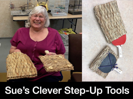 Sue's Cleverly Crafted Step Up Tools