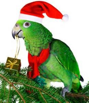 HAPPY HOLIDAYS FROM ALL THE PARROTS AT PEAC