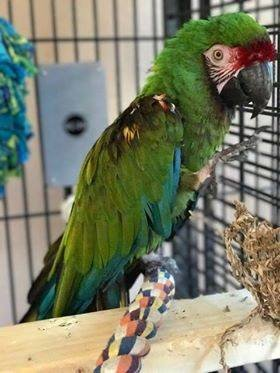 Reports on Save Companion Parrots through Rescue &