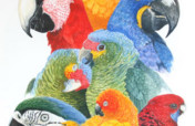 Save Companion Parrots through Rescue & Education