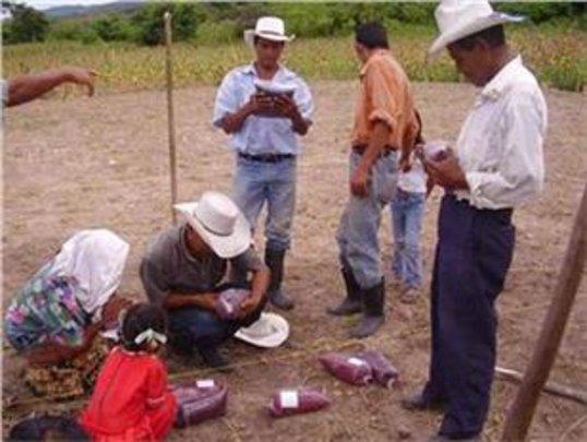 Participatory Farmer-Led Breeding Research