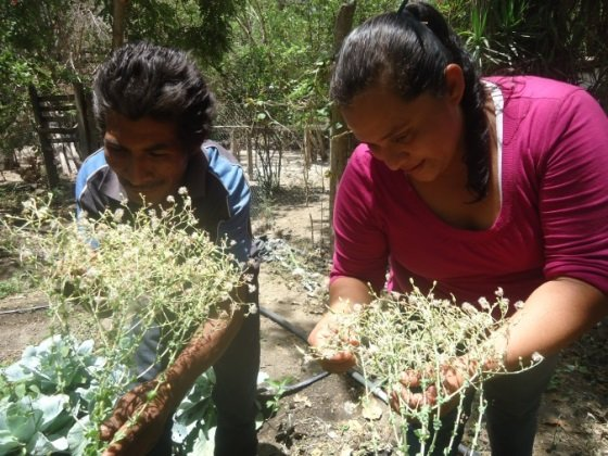 Seeds to Grow 100 Tons of Needed Food in Honduras