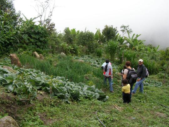Vegetables on Hillside
