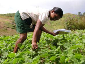 Woman in Bean fields, Courtesy FIPAH.