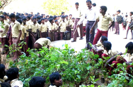 Provide 1000 plants to school planting program