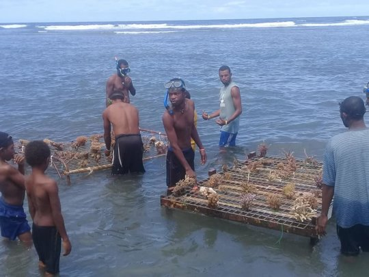 Young people setting up coral nursery beds