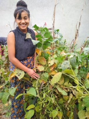 Saraswati class-9 is happily harvesting soybean.