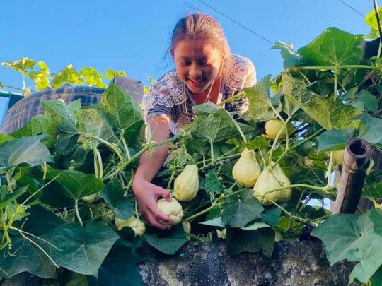 Pemba,class-5 harvesting Chayote (Iskus) vegetable