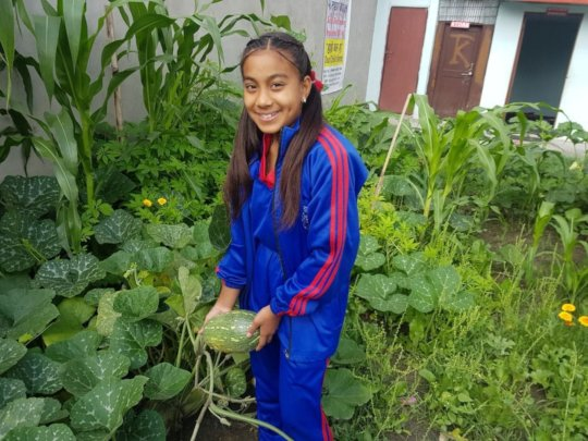 Saraswati, class-8 happy on pumpkin harvesting .