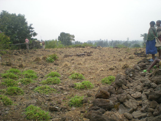 A site for a future rain-water catchment system.