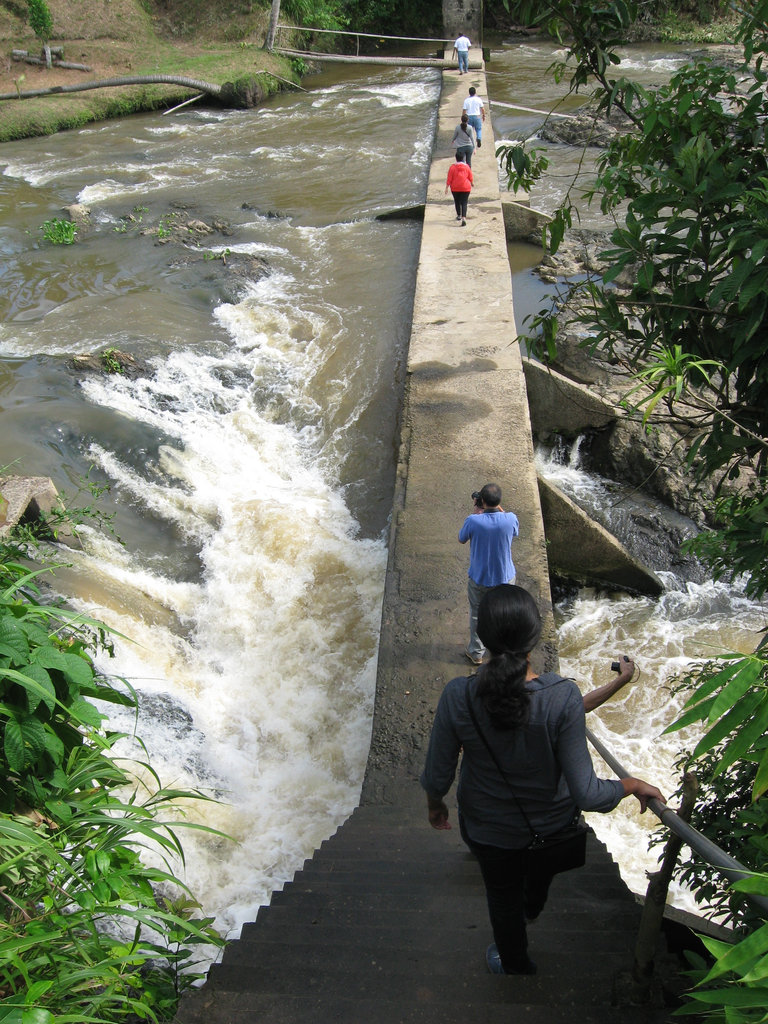 crossing a river to visit a coco-lumber plantation