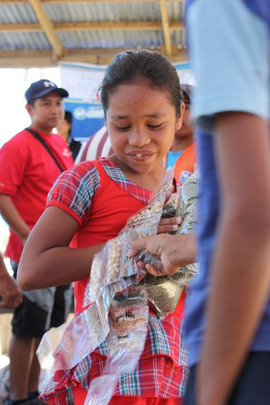 Seeds distribution in Alangalang