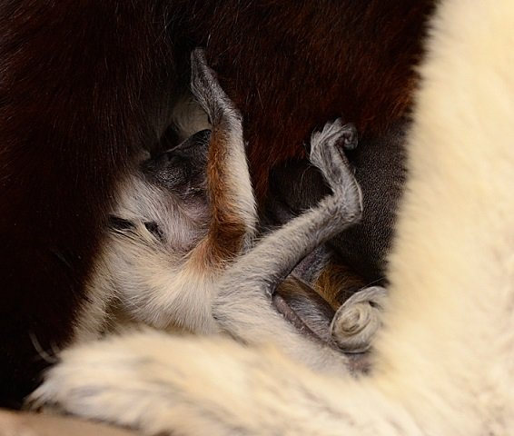 Blizzard Baby snuggling with mama!