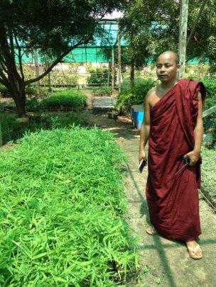 """Shwenadi monk """"greening"""" his monastic school"""
