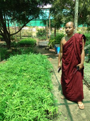 "Head monk ""greening"" his monastery"