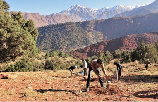 Volunteers plant carob and olive tree saplings