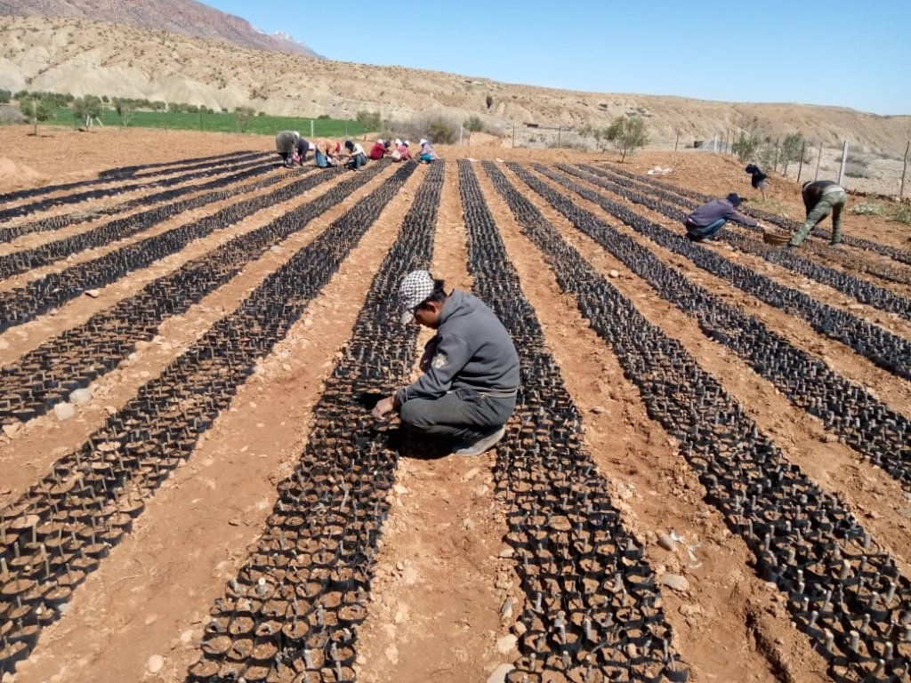 Plant Trees to Empower Farming Families in Morocco