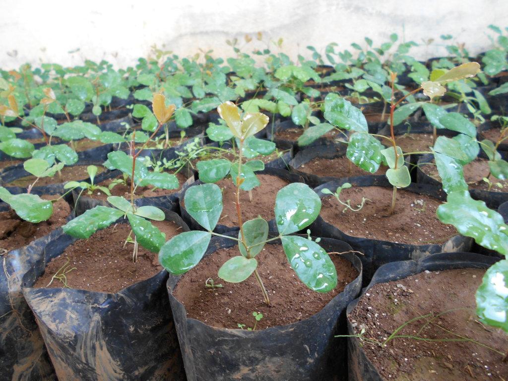 Tree Nurseries to Benefit 10,000 Rural Moroccans