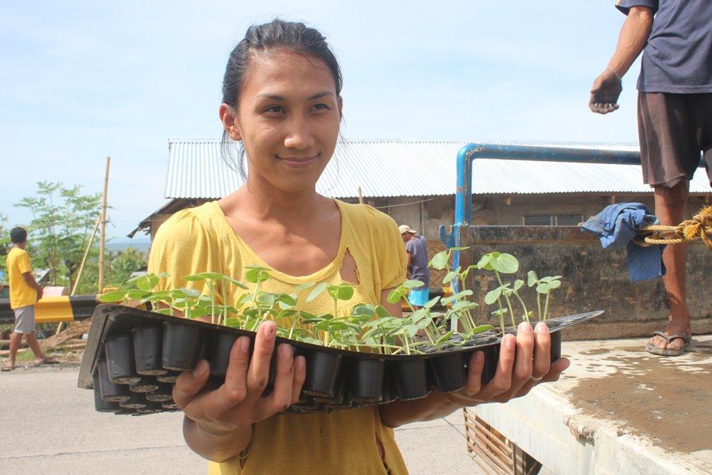 Distribution of seedlings