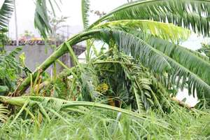 damaged agriculture