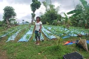 Producing vegetable seeds