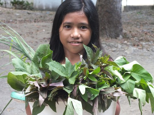 Typhoon Haiyan Survivors' Food Security Project
