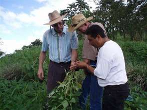 Mentoring plant health