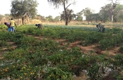 Burkina Faso: HIV AND FAMILY AGRICULTURE PROJECT