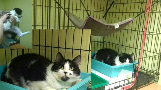 Cat Slavik after treatment