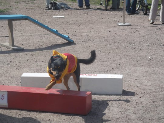 Lyalya to compete in agility