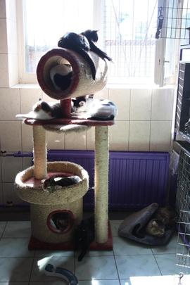 """""""Cat House"""". Rest after a delicious dinner"""