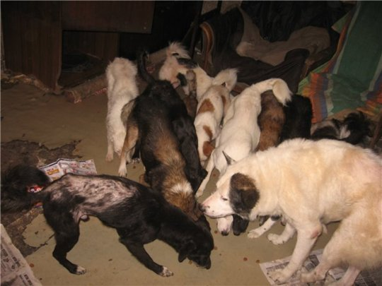 More than 50 dogs living in a two-rooms flat