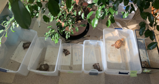 Box Turtle Spa Day