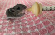 Give Orphaned and Injured Wildlife a Second Chance