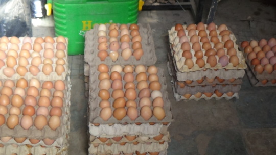 Crates of eggs given as palliatives for immunity