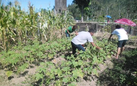 farmers harvesting their vegetables