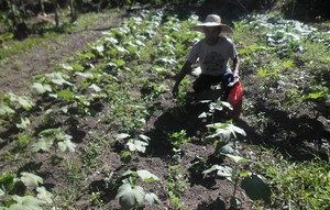 A farmer shows off his plotted vegetable garden